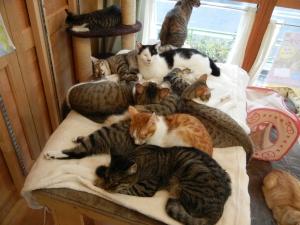 猫溜まり2