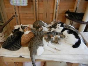 猫溜まり1