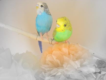 小鳥 オブジェ インテリア 子供部屋