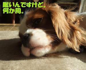 眠いんですけど。