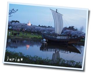 2012.4.25 桜