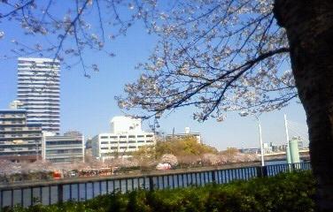 20110407お花見02