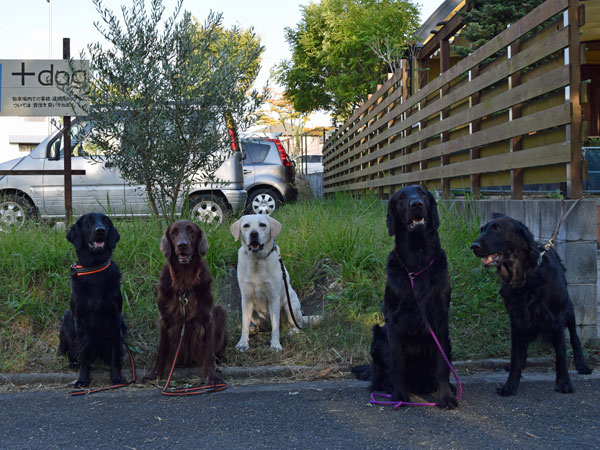 20141007+dog2.jpg