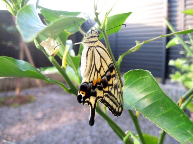 Butterfly_0889_1.jpg
