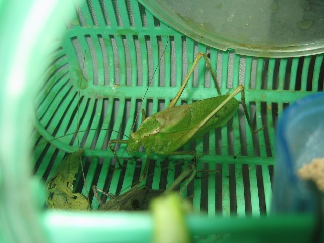 Hopper_0697_1.jpg