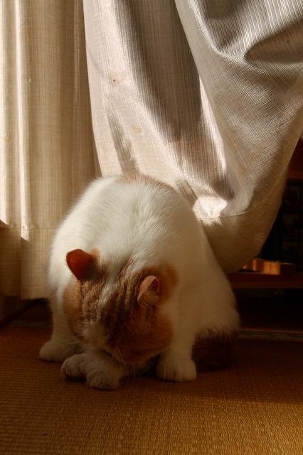 朝日を浴びる窓際族2