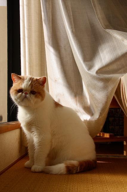 朝日を浴びる窓際族