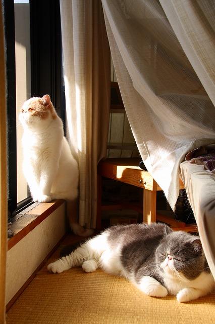 朝日を浴びる窓際族4