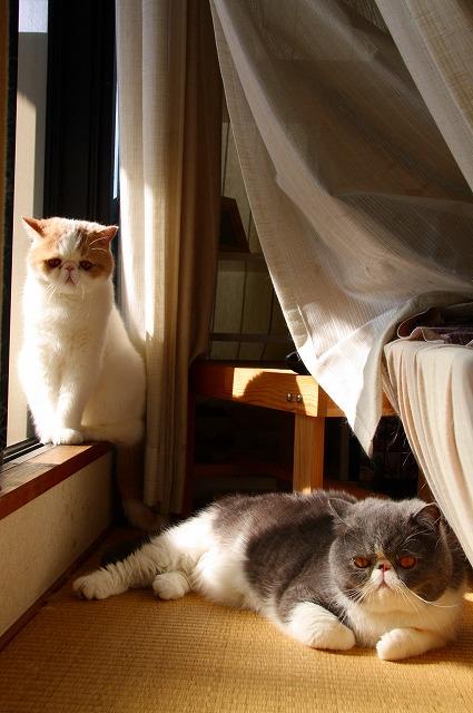 朝日を浴びる窓際族3