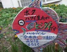 DSCF1977_convert_20120109002716.jpg