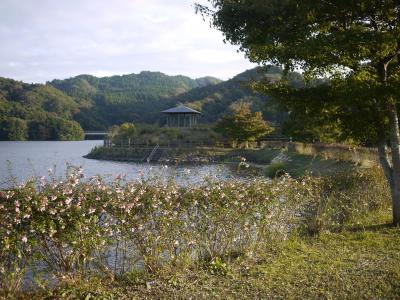 亀山ポタ9