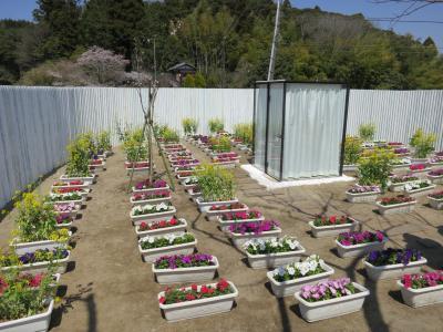 小湊菜の花8