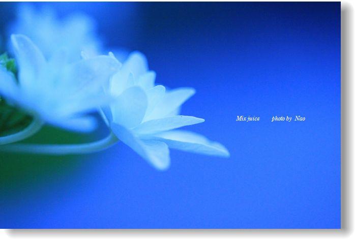 IMG_8330.jpg
