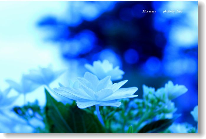 IMG_841300.jpg