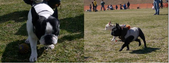 スクリーンショット(2011-03-29 20.35