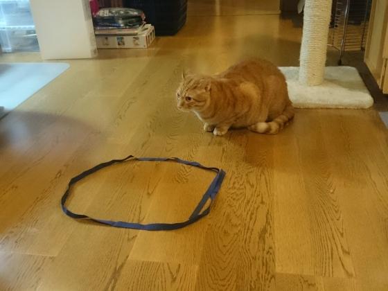 猫転送装置7