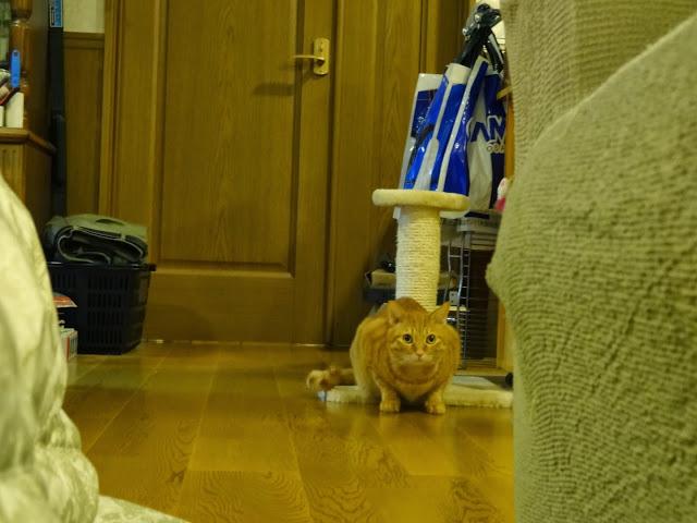 迫ってくる猫2