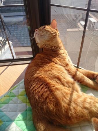 日向ぼっこ中の猫1