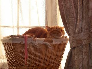 syugeiクラブ猫 076