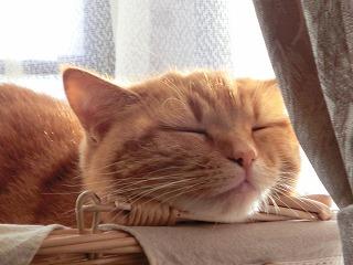 syugeiクラブ猫