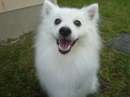 ブヒッな笑顔