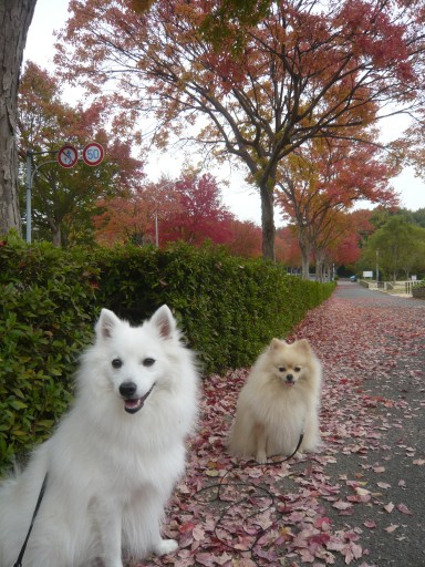 秋でしゅね~