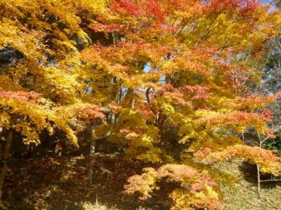 四季桜10