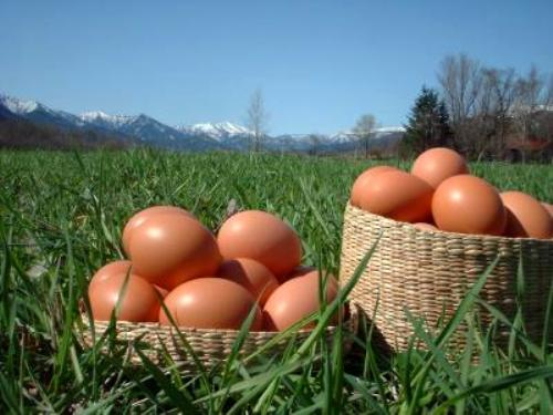 平岡農園自然卵
