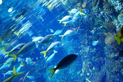 海遊館お魚