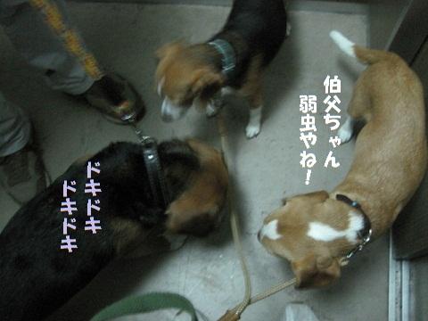 003_20100818135226.jpg