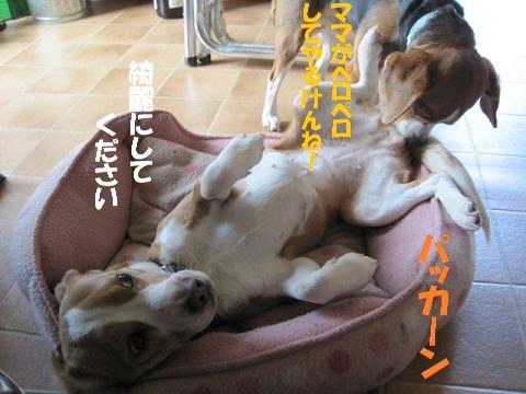 003_20110327085157.jpg