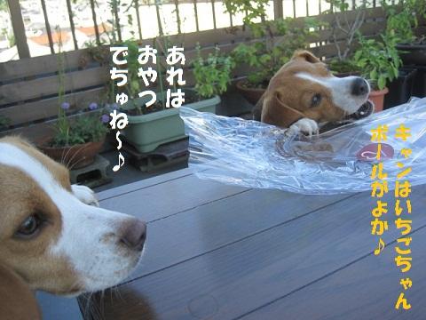 004_20100811200312.jpg