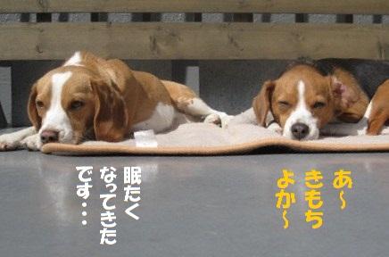 004_20110301180402.jpg