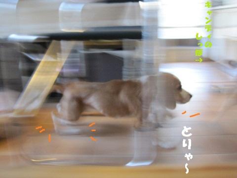 006_20101011163833.jpg