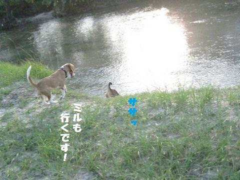 010_20101009191311.jpg