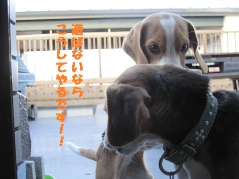 010_20101027182029.jpg