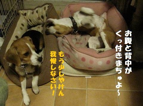 013_20101024182819.jpg