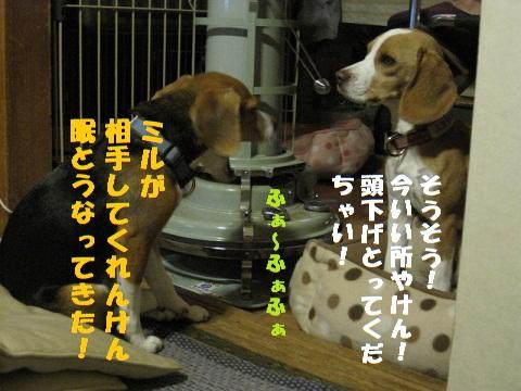 018_20101104202754.jpg