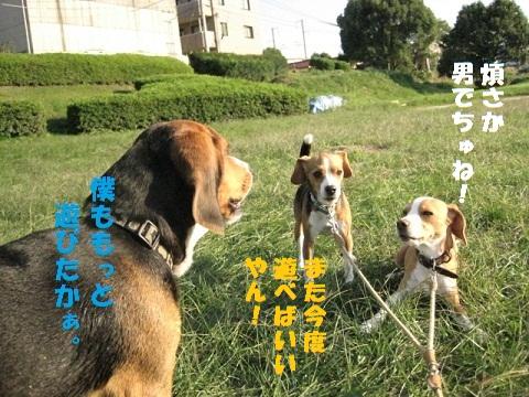 022_20101107082520.jpg