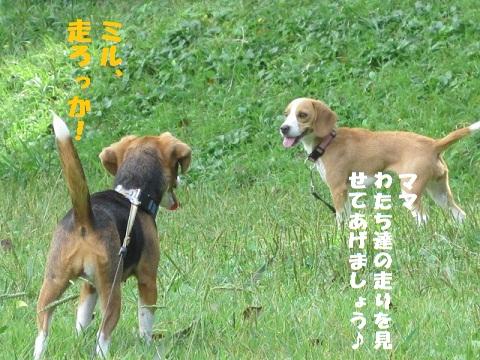 024_20101018181348.jpg