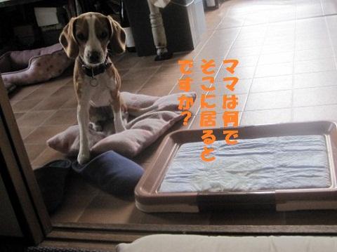 024_20101028204451.jpg