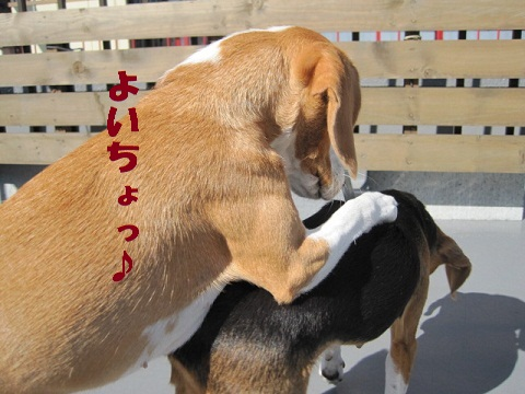 030_20101108063840.jpg