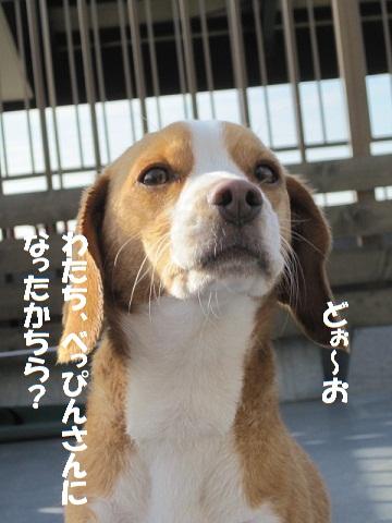 033_20110228103210.jpg