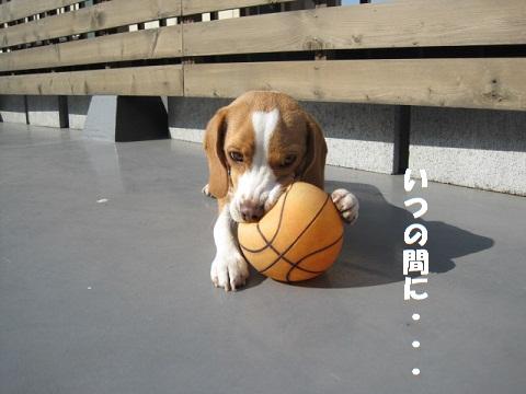 037_20101121080038.jpg