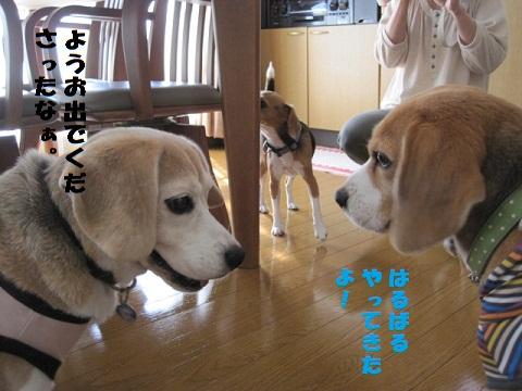 042_20101014202543.jpg