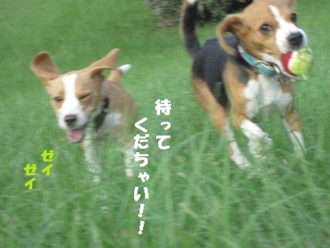 050_20101009190743.jpg