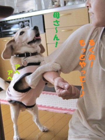 059_20101013203331.jpg