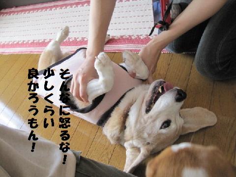 060_20101013203451.jpg