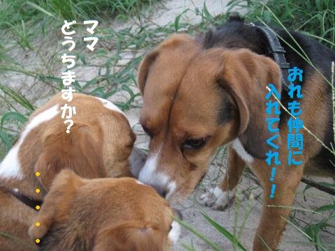 062_20100818141242.jpg