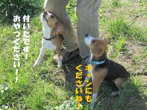 070_20101120085756.jpg